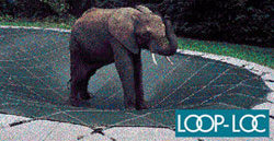 elephant standing on Loop-Loc pool cover